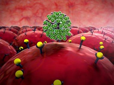 Field of cells, virus