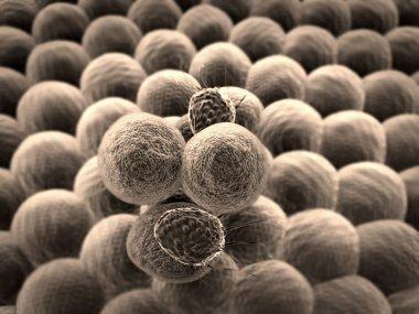 Cell, T-lymphocytes