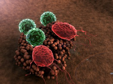 Macrophage, fungus