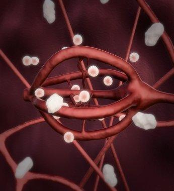 Human neural system