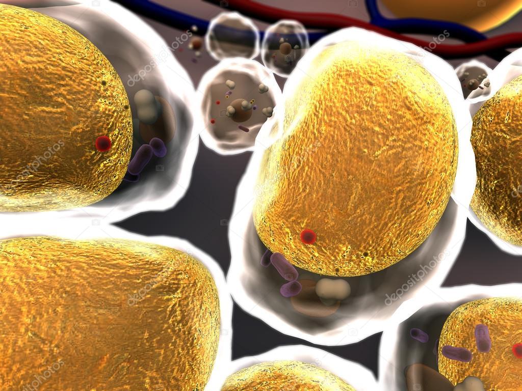 Célula de grasa, células — Fotos de Stock © Ugreen #68418413