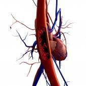 Fotografia arteria, delleritrocito