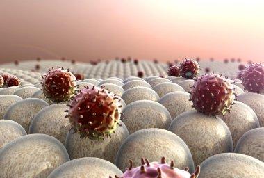 Cells, macrophage