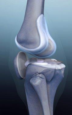 3d rendered knee illustration