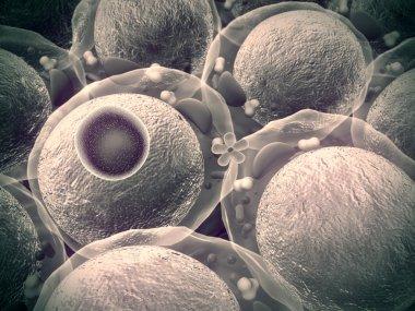 Insulin, cells