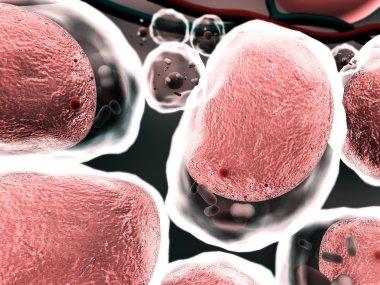 cells, karyon