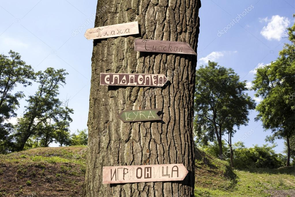 Tree in the woods with signs on it