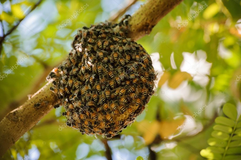 Image: Pequeño salvaje colmena con abejas — Foto de stock © Fesenko ...