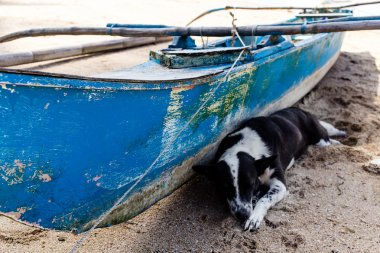 A dog is sleeping near the boat on the beach Corong - Corong is an island of Palawan in the Philippines (El Nido)