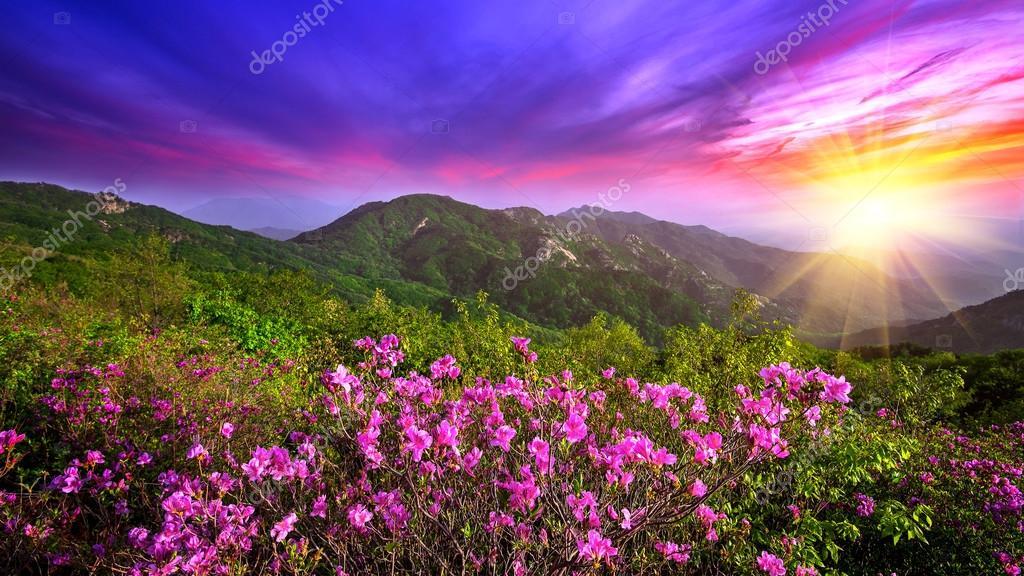Lindas Flores Cor De Rosa Nas Montanhas Por Do Sol Montanha De