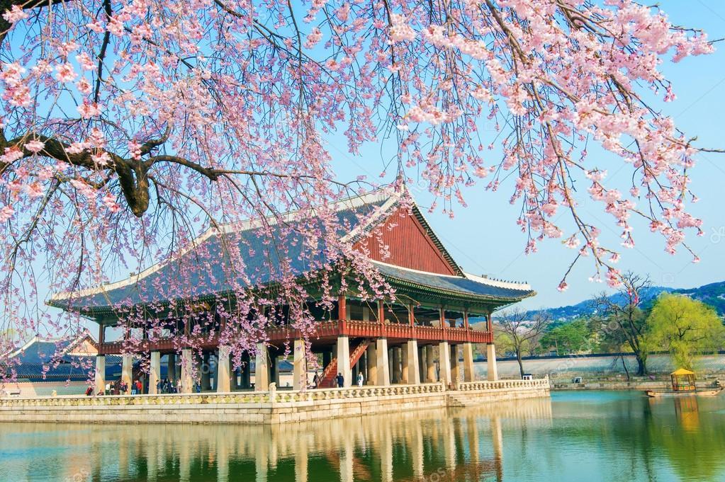 Gyeongbokgung Palace avec les cerisiers en fleurs au printemps, Corée — photo de stock