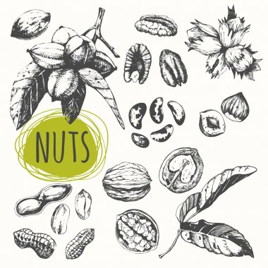 Set of hand drawn nuts.