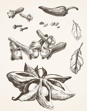Set of anise, chili, laurel, cloves