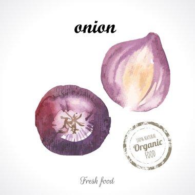 Watercolor  Violet onion