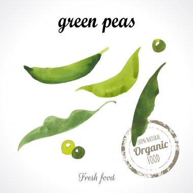 Watercolor young peas.