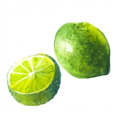 Lime watercolor fruit