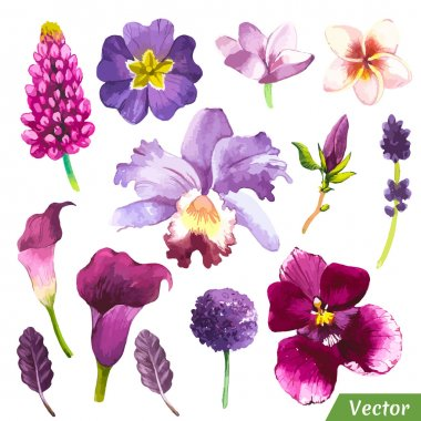 Painting violet set of flowers with calla lily, plumeria, orchid and leaves. clip art vector
