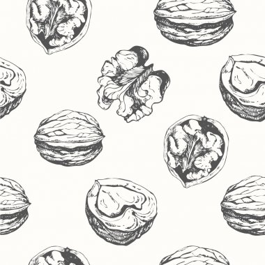 Hand-drawn sketch of walnuts.