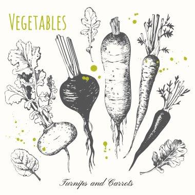 Set of hand drawn roots. Fresh organic food.