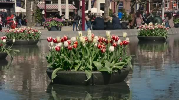 The annual Tulip Festival in Amsterdam
