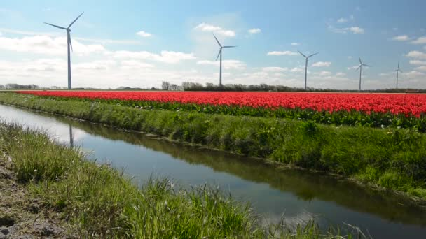 Tulipánová pole severně od nizozemské provincie