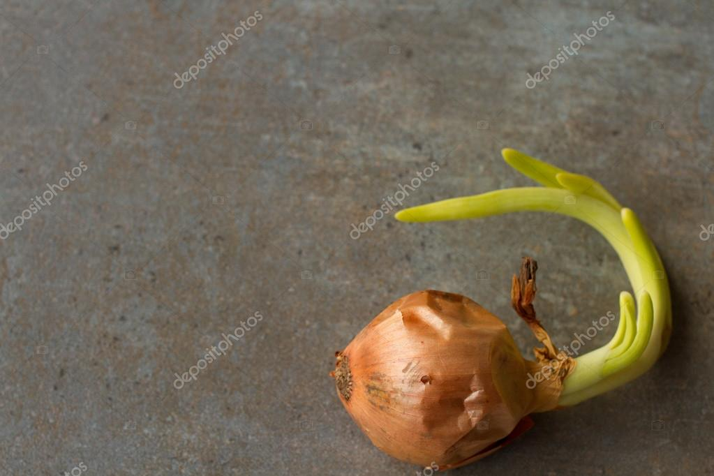 Green onion on a gray background