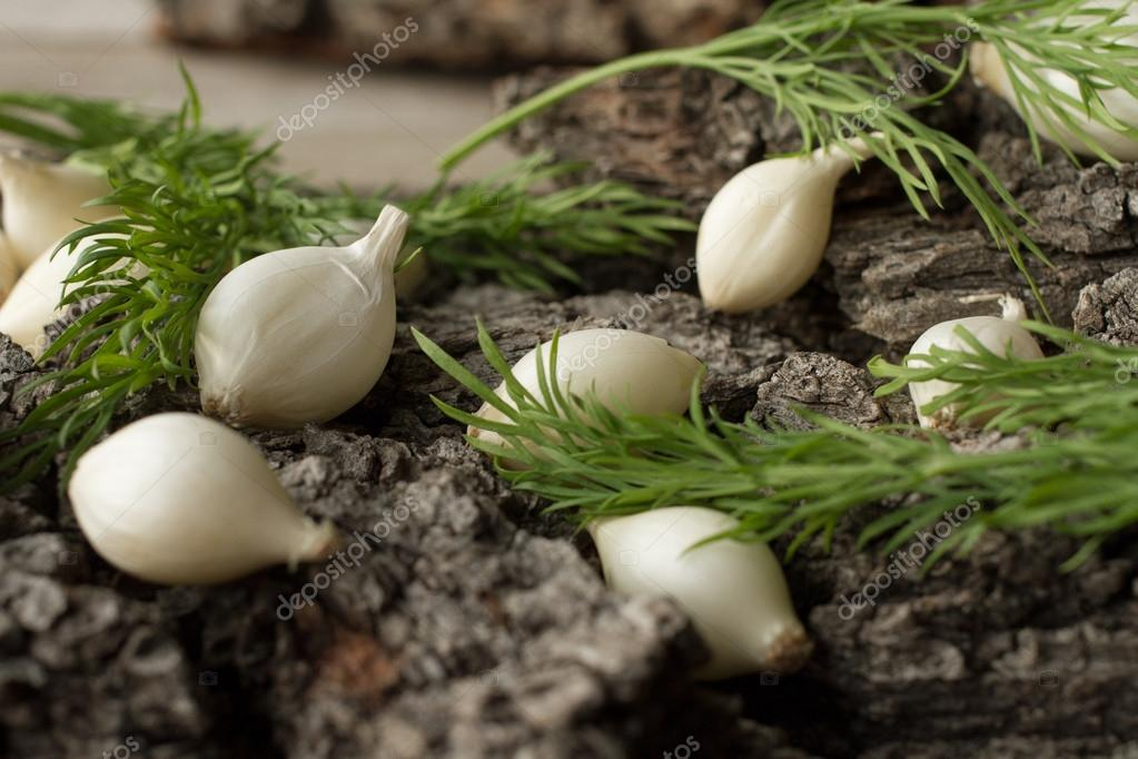 White onion on a gray tree bark