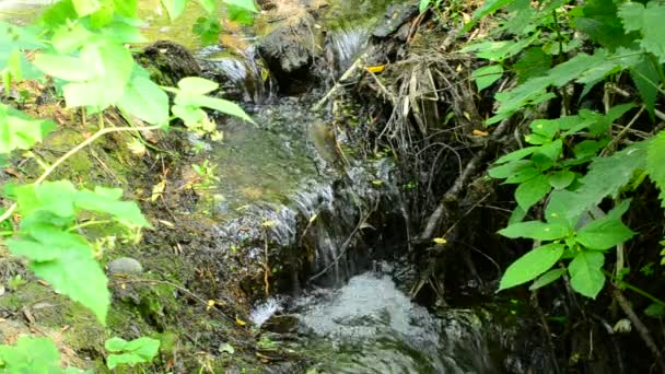 Beautiful brook with small waterfalls flowing in a forest