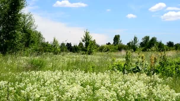 Mnoho rychlé ptáky letět v létě přes zelenou louku s květinami