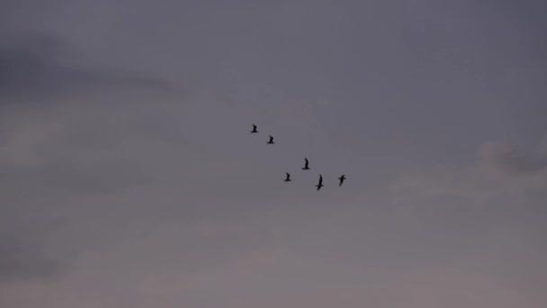 Madarak repülnek a V-kialakulását