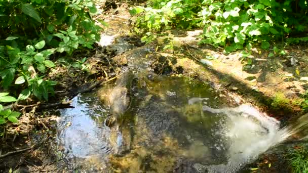 Potok s malým vodopádem protéká peřeje v létě