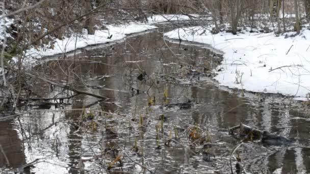 Potok protéká zasněžená krajina