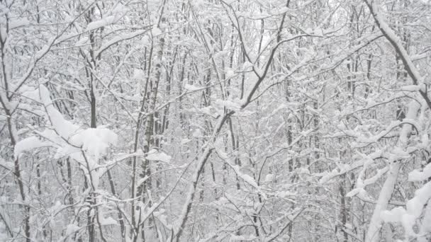 Sníh padá v listnatých lesů na pozadí bezlistých stromů