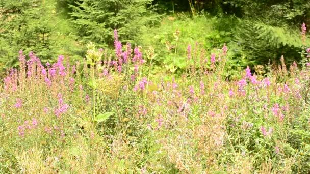 Bellissimo prato verde con i fiori in foresta