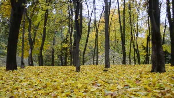 Krásné listy podzim podzim v lese nebo v parku