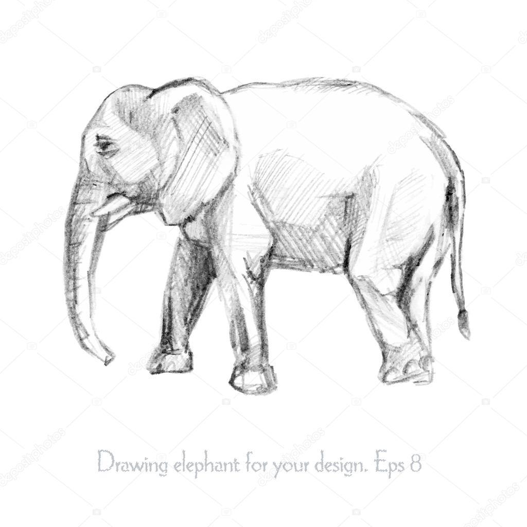Pencil sketch of an elephant stock vector