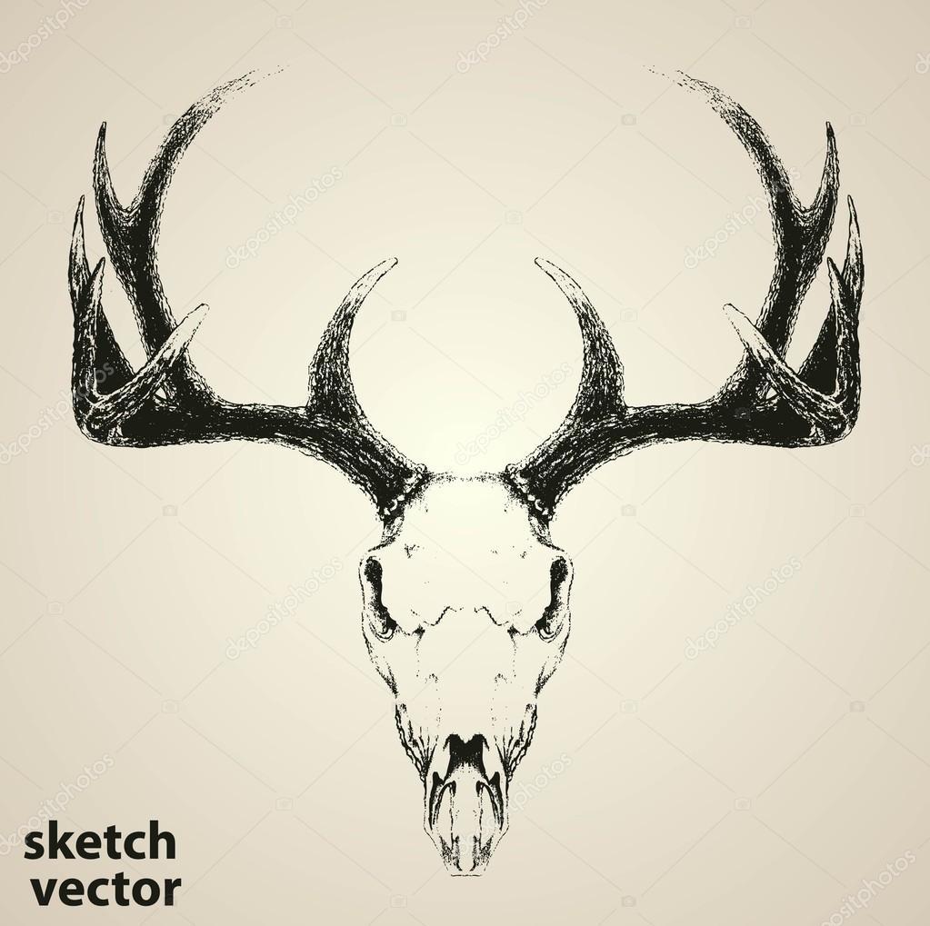 Vector cráneo de ciervo aislado — Vector de stock © ixies #124769270