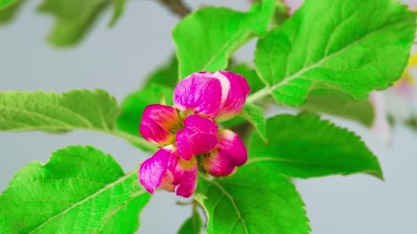červené květy na jaře