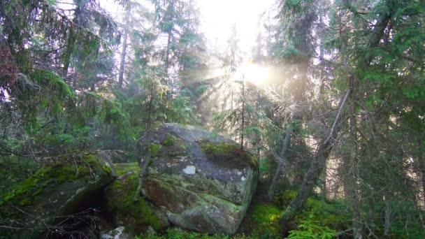 Foresta di pini di magia ad alba