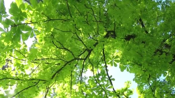 Letní listnatý les