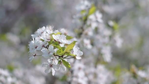 Tavasszal a gyümölcs-gyümölcsös