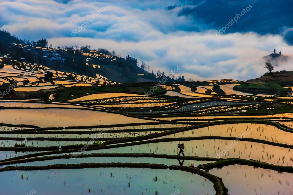 Por La Mañana Vista De China Campos De Arroz Y Campesinos