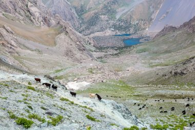 Mountain lands and flock of sheep