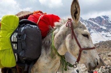 Cargo donkey head