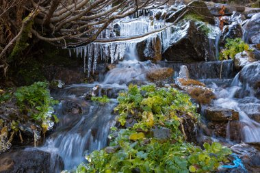 Rapid Mountain Creek and Frozen Icicles