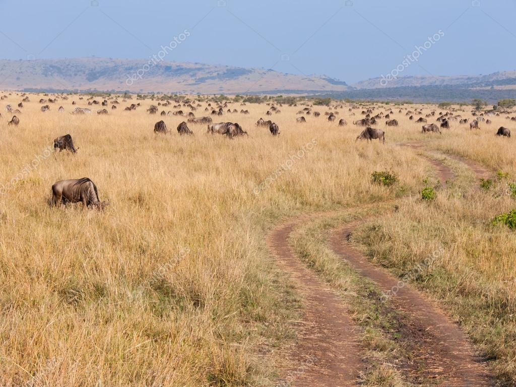 Chemin De La Terre Par Lintermédiaire De Bisons Dans Le Masai Mara