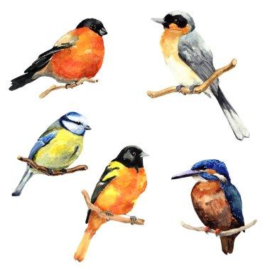 Watercolor birds set