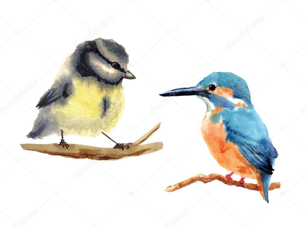 Hand drawn watercolor birds