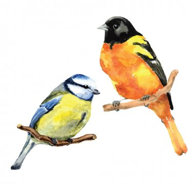 watercolor oriole and  tit birds