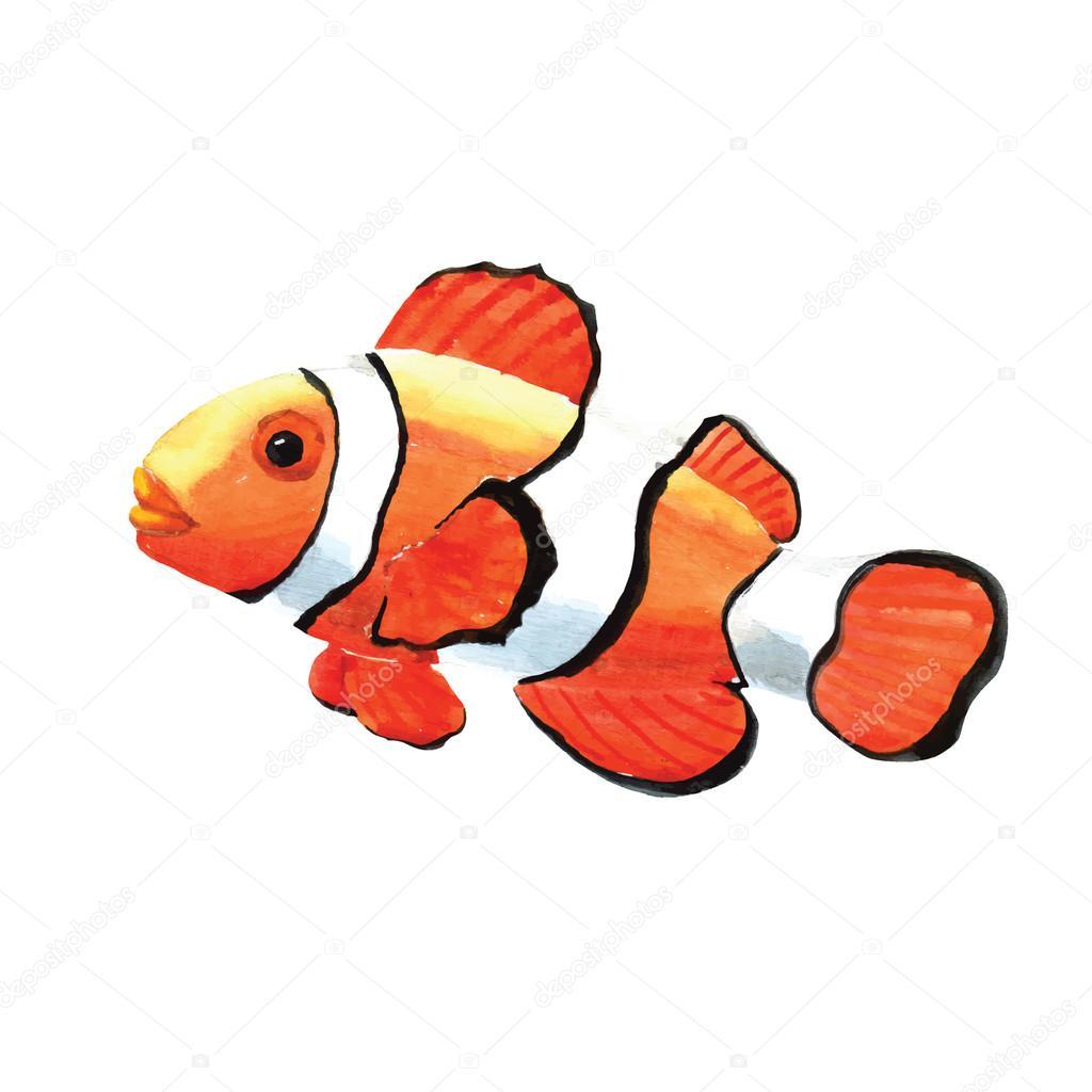Handgezeichnete Aquarell Clownfische — Stockvektor © Radhanamini ...
